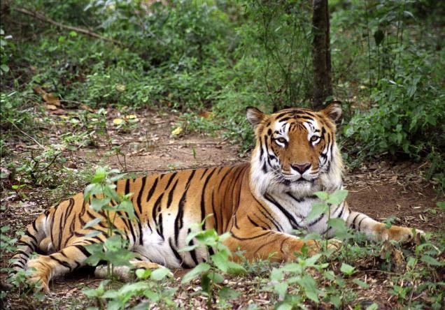 tiger in hindi essay इन्हें भी जरुर पढ़ें रेल यात्रा पर कविता - poem on train in hindi raigadi yatra ka varnan rail journey kavita.